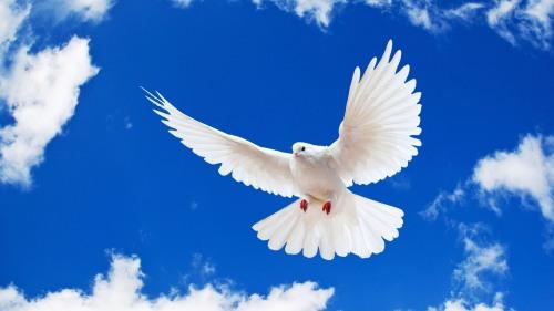 Скачать музыку дух святой небесный голубь